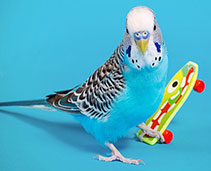 Bird Accessories and Toys