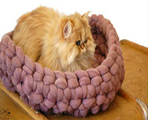 Cat Carriers and Beds