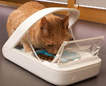 Cat Feeders and Bowls