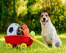 Dog Accessories and Toys