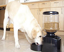 Dog Feeders and Bowls