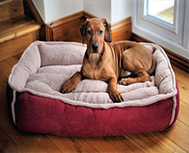 Dog Houses and Beds