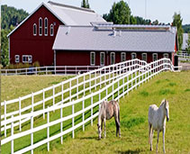Horse Barns and Fencing