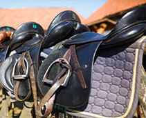 Horse  Equipment and Accessories
