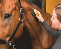 Horse Grooming and Health