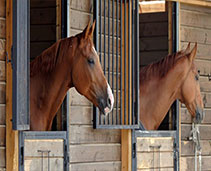 Horse Stables and Trailers
