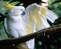 Medium and Large Parrots