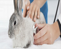 Small Pet Health and Medication
