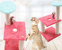 Cat  Accessories and Toys