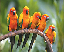 Conures and Small Parrots